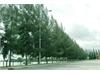 Bán biệt thự cao cấp Sadeco Sông Ông Lớn Bình Chánh | 2