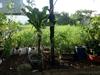 Bán đất Biệt thự sổ hồng tại Hiệp Bình Chánh, Quận Thủ Đức | 9